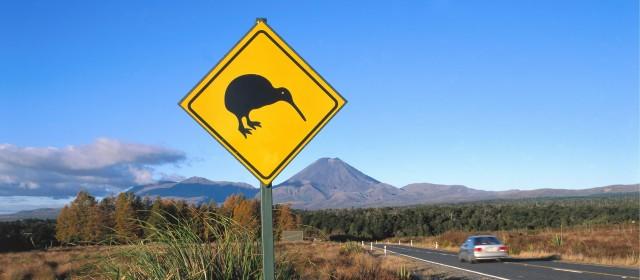 Von den Kühen zu den Kiwis - auf nach Neuseeland!